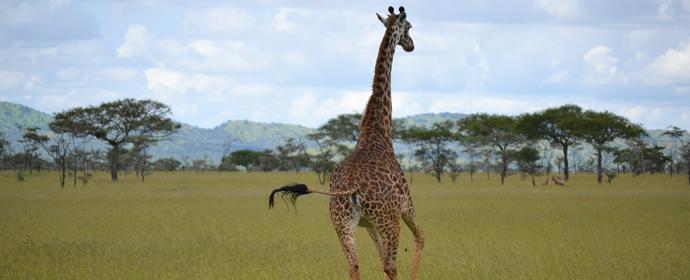 Safari Kenya, Tanzania & plaja Zanzibar, 13 zile -  august 2015