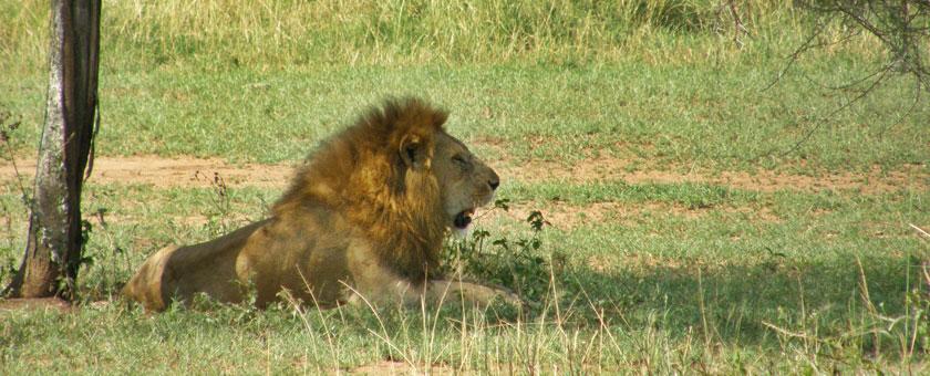 Revelion - Safari Tanzania & plaja Zanzibar, 11 zile