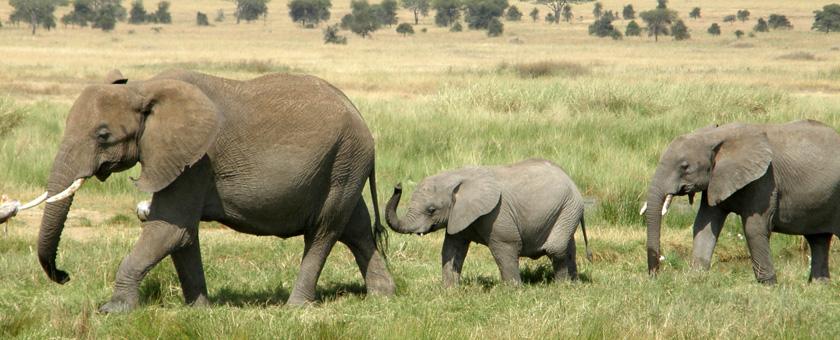 Tanzania Family Adventure