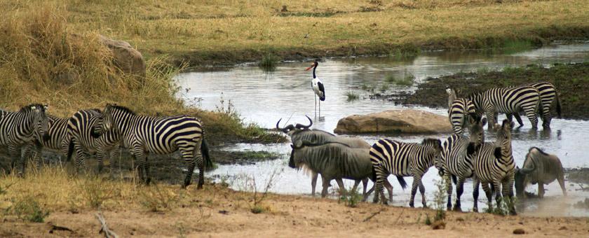 Atractii Ruaha Tanzania - vezi vacantele