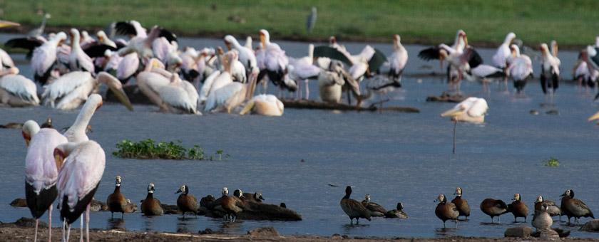 Atractii Speke Bay, Lacul Victoria Tanzania - vezi vacantele