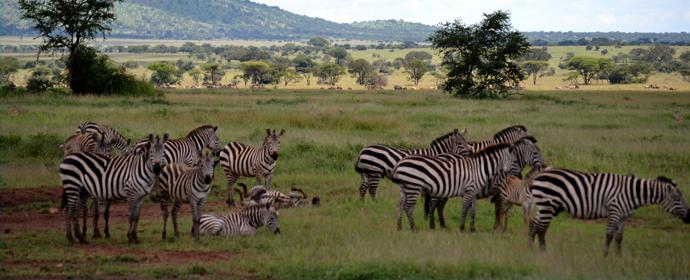 Adventure Tanzania