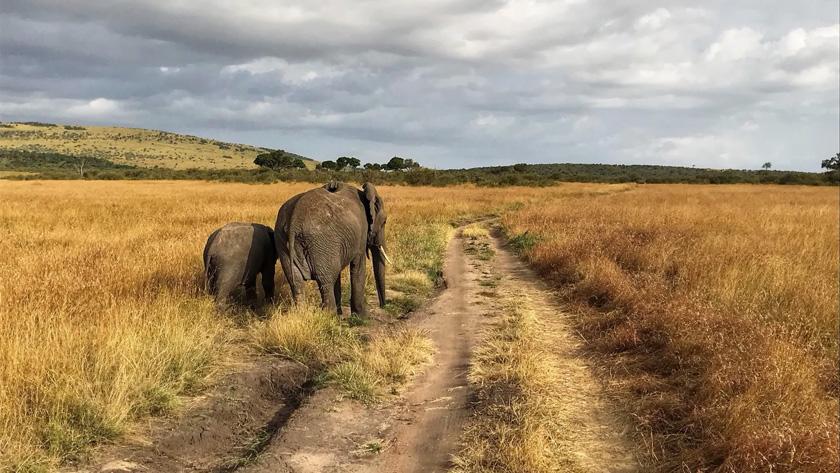 Discover Kenya & Tanzania - august 2021