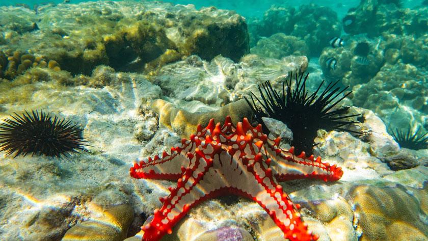 Sejur plaja Zanzibar, 12 zile - 31 ianuarie 2021