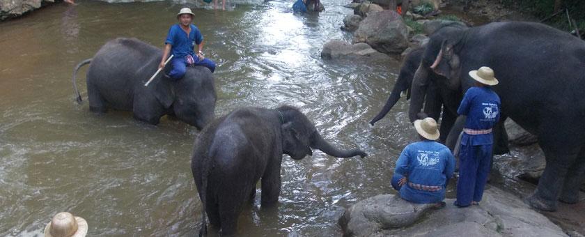 Chiang-Mai Tabara de elefanti Mae-Sa, Thailanda Poza realizata de Anca Brodoceanu, Noiembrie 2013