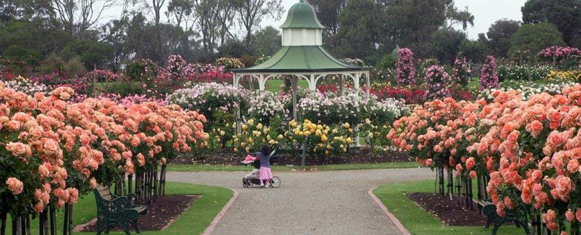 Rose Garden Thailanda