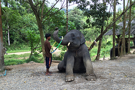 Impresii Thailanda - noiembrie 2015